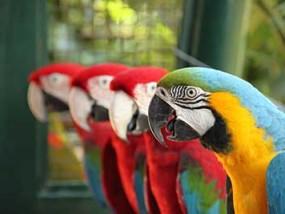 parrotssm